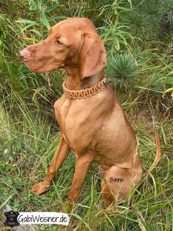 Hundehalsband verstellbar Leder 3 cm breit, Nappaleder in Mandel und Mahagoni.