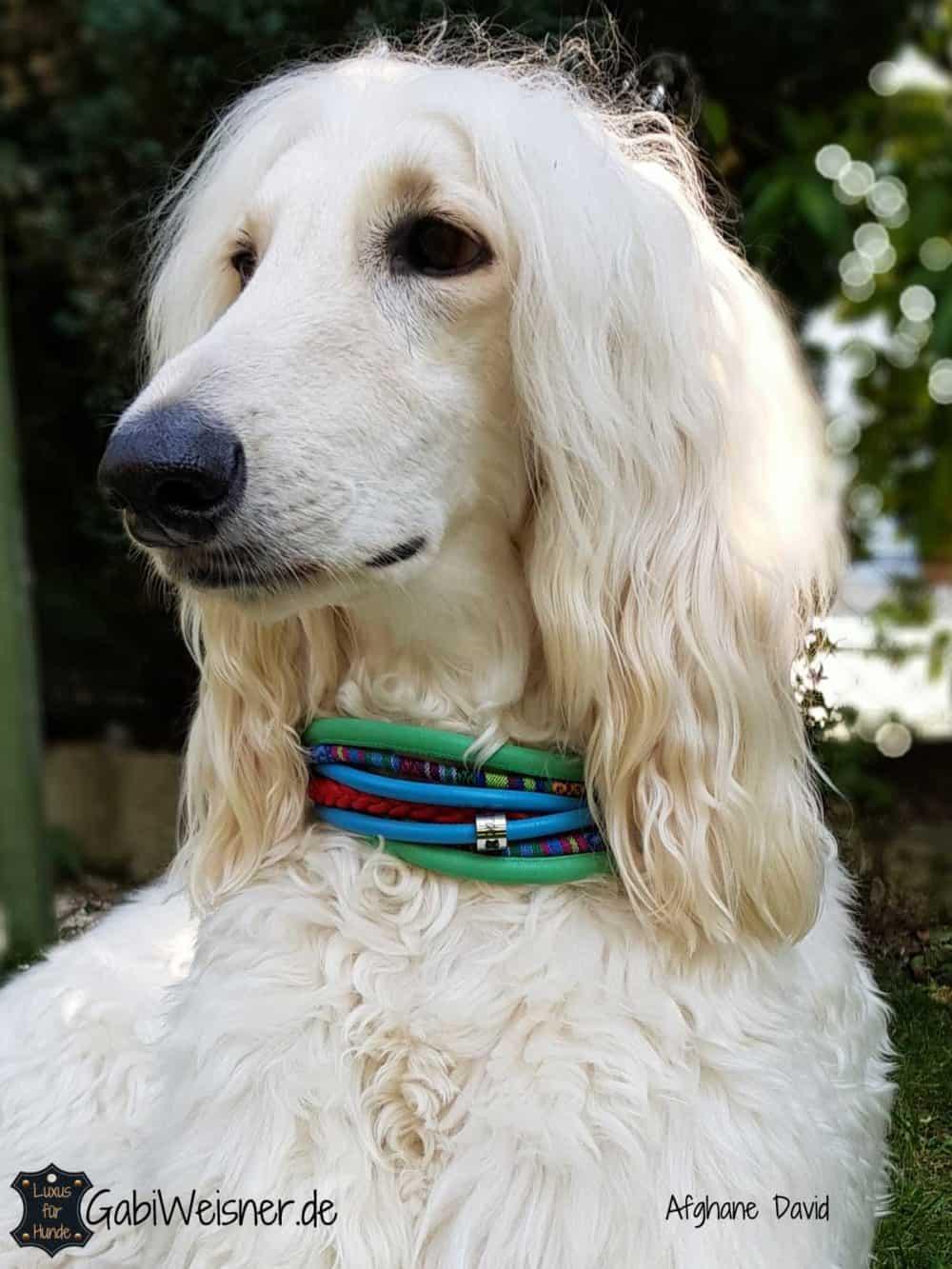 Hundehalsband 6 cm breit mit Zugstopp. Afghane David.