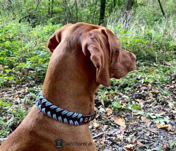 Lederhalsband für kleine Hunde. Eine Lage Leder 2 cm breit. magyar vizsla bonnie