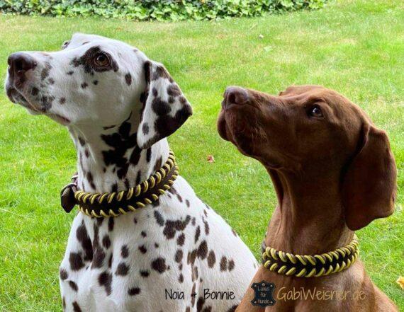 Hundehalsband 25 mm breit Leder doppelt gelegt. Dalmatiner Noia und magyar vizsla Bonnie