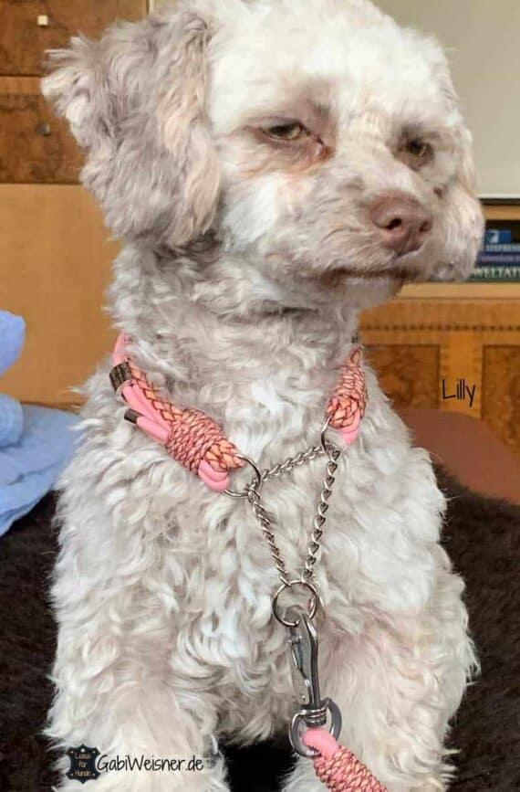 Mini Halsband mit Zugstopp
