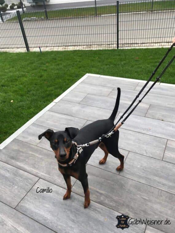 Hundehalsband mit Edelstein Achat in Schwarz