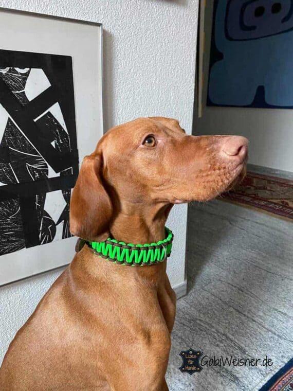 Hundehalsband Neon, Leder 3 cm breit