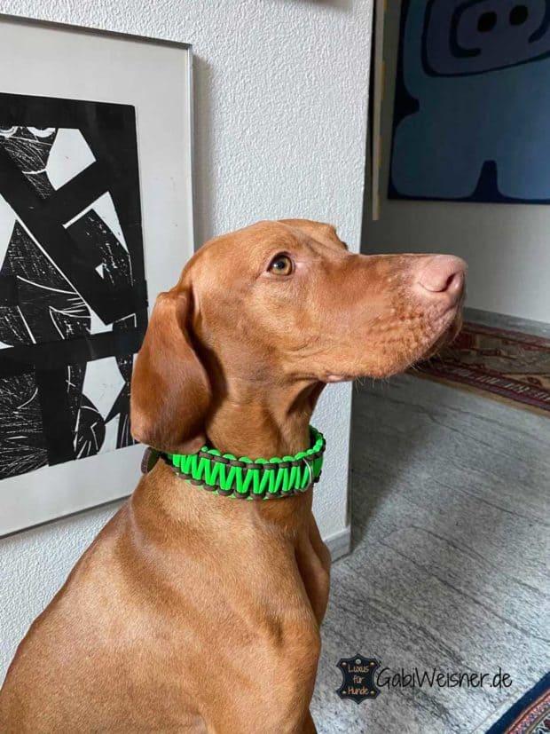Hundehalsband Neon, Leder 25 mm breit