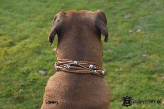 Luxus Hundehalsband mit Skull und Ohr-Tunnel, Zugstoppkette, für große Hunde. Rhodesian Ridgeback Sammy