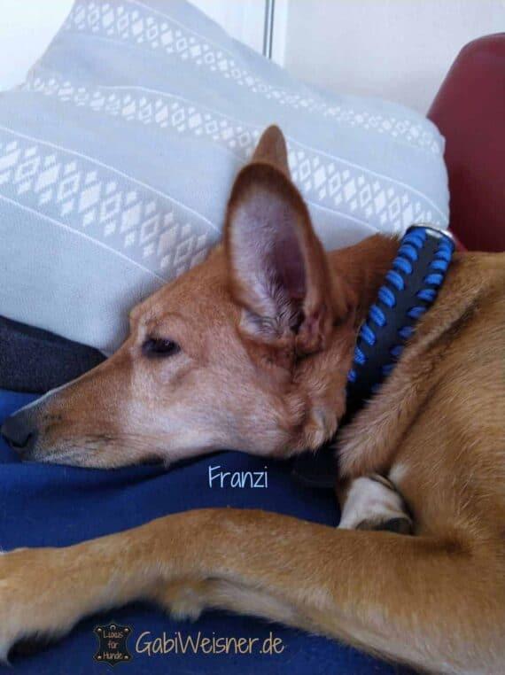 Hundehalsband Blau, 3 cm breit, Franzi