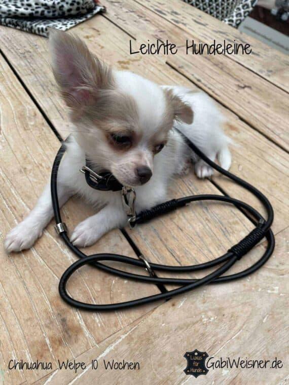 Leichte Hundeleine, Lederleine für kleine Hunde, Welpen, Chihuahua