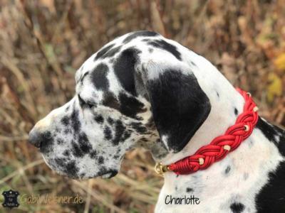Hundehalsband weihnachtlich in Rot mit Strass und Gold-Dogge-1