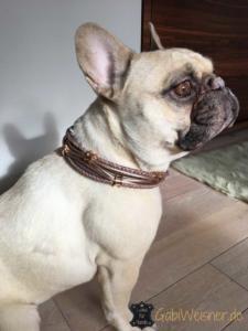 Hundehalsband mit Ohrtunnel in Rosegold