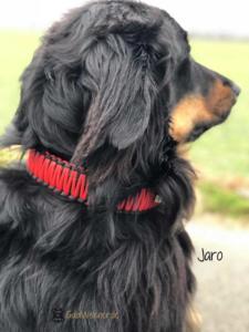 Hundehalsband Leder mit Zugstopp