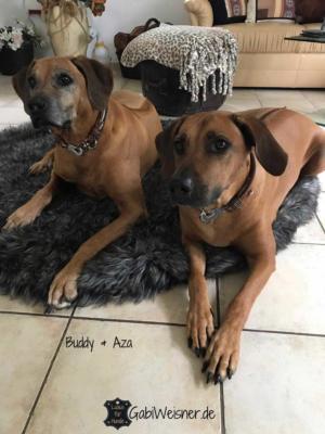 Buddy--Aza-3 (1)