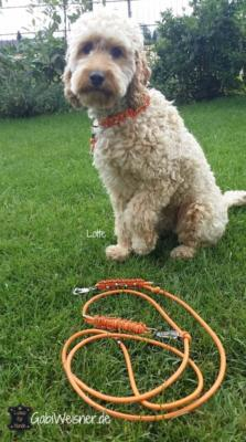 Halsband-und-Leine-kleine-Hunde-Orange-Lotte