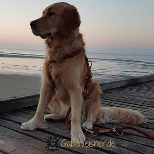 Hundegeschirr-aus-Leder-nach-Maß-cosi-maus-1