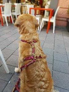 Hundegeschirr Cosi Maus 3