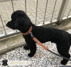 Hundehalsband-2,5-cm-breit-Natur-mit-Tuerkisen