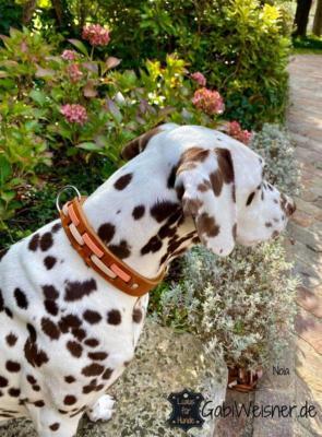 Hundehalsband-25-mm-breit-Leder-Apricot-Beige