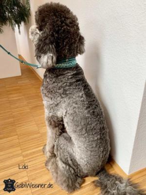 Hundehalsband-5-cm-breit-Leder-Petrol-Großpudel-Loki-1