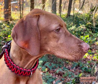 Hundehalsband-Leder-25-mm-breit-Nappaleder-in-Rot-Bonnie