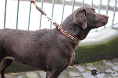 Hundehalsband-Leder-Mix-in-Braun-Perlmutt-Tula-1