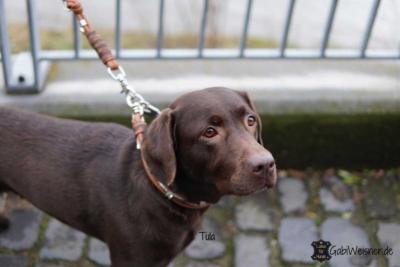 Hundehalsband-Leder-Mix-in-Braun-Perlmutt-Tula-2