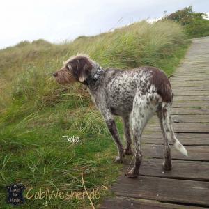 Hundehalsband-Leder-Txoko-2