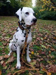 Hundehalsband-Leder-extra-breit-geflochten-in-Cognac-und-Blau-SAMU-1
