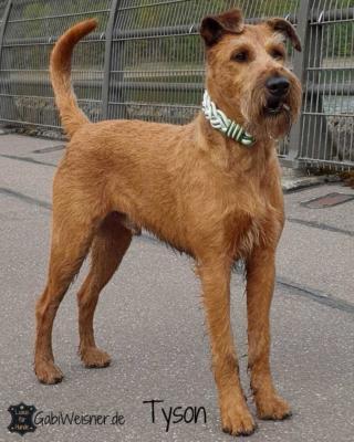 Hundehalsband-Leder-in-Weiß-mit-Grün-metallic-breit-geflochten-Tyson 1 (1)