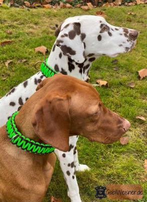 Hundehalsband-Neon-Grün-Braun-Bonnie-Noia