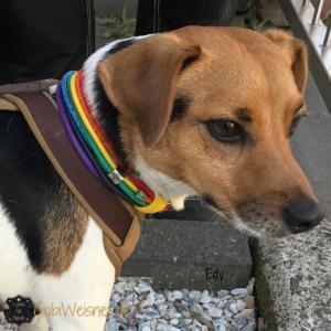 Hundehalsband-Regenbogen-3-cm-breit-EDY-4
