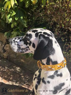 Hundehalsband-Rindsleder-mit-Kreuzen vasco
