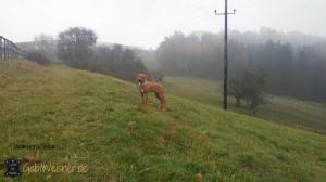 Hundehalsband-hochzeit-Elfenbein-Gold-Silber-oscar-1