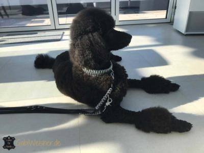 Hundehalsband-leine-silber glitzer strass swarovski 2
