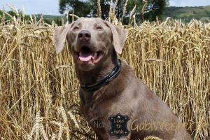 Hundehalsband mit Ohr Tunnel