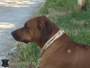 Hundehalsband-mit-Ohrtunnel-in-Gold-Leo-2