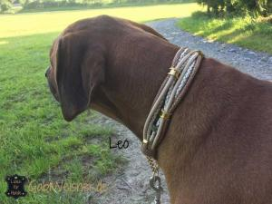 Hundehalsband-mit-Ohrtunnel-in-Gold-Leo