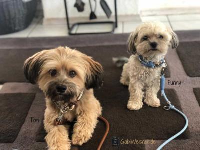 Hundehalsband-und-Leine-Toni-Funny