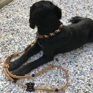 Hundehalsband-und-Leine-im-SET-Luxus-für-große-Hunde 3