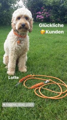 Hundehalsband Leder Pudel Orange