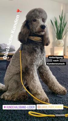 Hundehalsband Leder Schwarz Gelb Luxus für Hunde Gabi Weisner Großpudel