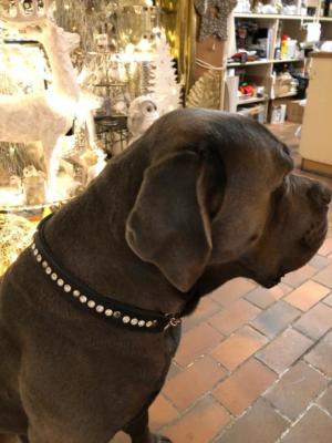 Hundehalsband Swarovski Leder 1