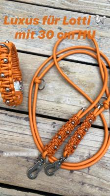 Hundehalsband leder orange leine edelstahl