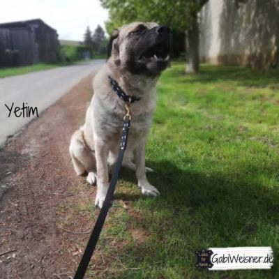 Hundeleine-Fettleder-2-cm-breit-yetim 1