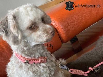 Hundeleine-Leder-rund-6-mm-Rosa-Lilly