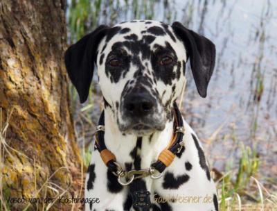 Hundehalsband-Luxus-mit-Ohrtunnel-VASCO