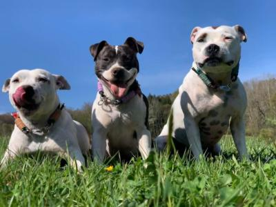 hunde von antje