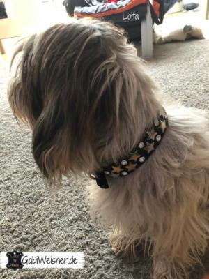 hundehalsband-leder-kleine-hunde-sterne-strass-swarovski-Lotta-1