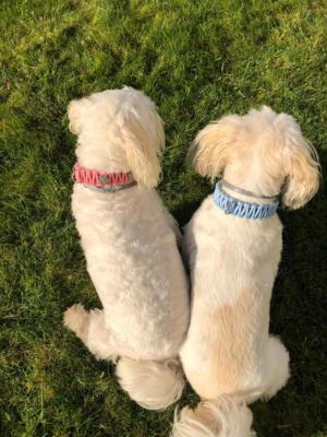 knotenhalsband-rosa-hellblau malteserhund 1