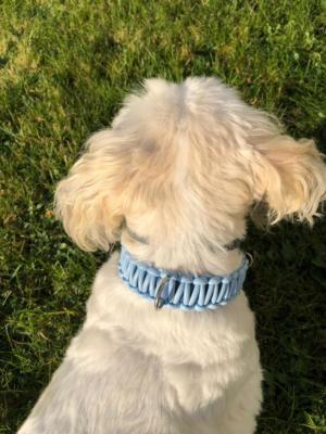 knotenhalsband-rosa-hellblau malteserhund 4