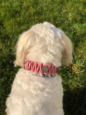 knotenhalsband-rosa-hellblau malteserhund 5